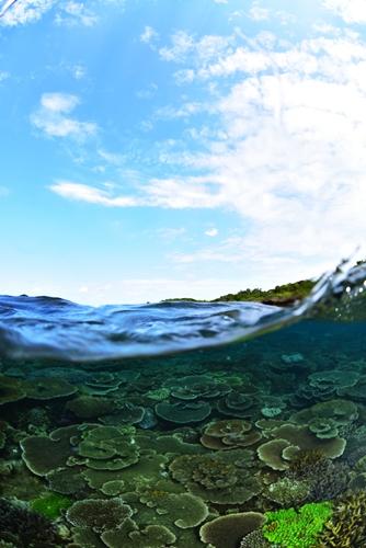 瀬底島半水面