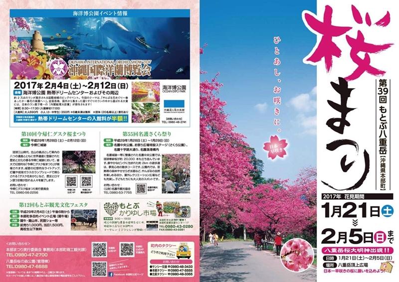 桜祭り&洋ラン博